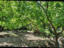 فروش زمین کشاورزی 800 متر در شهریار در شیپور