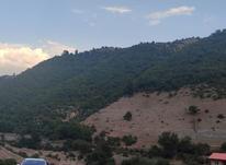 زمین 4,000 متری در کجور در شیپور-عکس کوچک