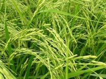 فروش زمین کشاورزی به متراژ 2360 متر در شیپور