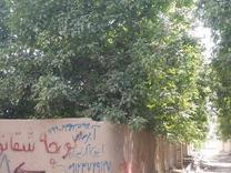 باغ با درختان عالی مهرچین ملارد در شیپور