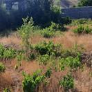 500متر باغ در خود سیوان