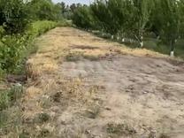 باغ در شهریار در شیپور