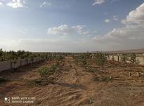 باغ700متر کنجینه در شیپور-عکس کوچک