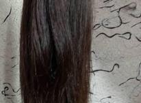 موی طبیعی سرچیده در شیپور-عکس کوچک