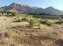فروش زمین واقعه در قلات منطقه باغ اسبس در شیپور-عکس کوچک