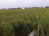 فروش زمین کشاورزی 800 متر در بابل خردونکلا ویو ابدی در شیپور