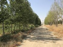 5000 متر باغ در شیپور