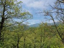 فروش زمین 1000 متری پلاک یک جنگل اربکله در شیپور