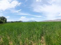 زمین 10000 متری نوشهر کندلوس در شیپور