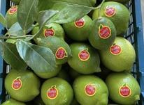 فروش عمده لیمو ترش و خرما در شیپور-عکس کوچک