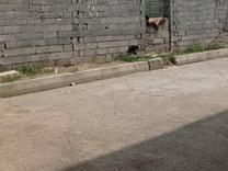 فروش زمین مسکونی قابل معاوضه در شیپور