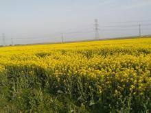 زمین مزروعی 10000 متر در شیپور