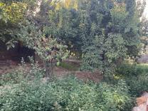 فروش زمین مسکونی 1250 متر در شهریار در شیپور