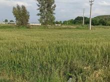 فروش 500 متر زمین مسکونی روستای نامن در شیپور