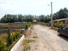 فروش زمین 327 متری کمربندی امیرکلا در شیپور