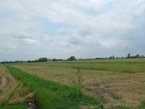 فروش زمین کشاورزی 10000 متر در سرخرود در شیپور