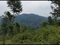 1،000متر مسکونی-چشم اندازکوه و جنگل-داخل طرح هادی در شیپور