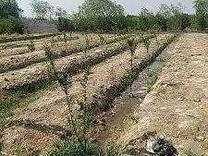فروش زمین کشاورزی 1300 متر در پرند در شیپور