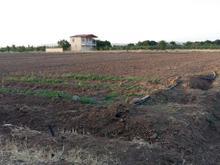 زمین کشاورزی 5000 متر در شیپور