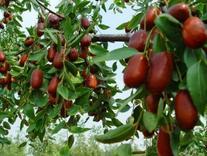 فروش باغ 500 متری با قیمت بسیار مناسب در شیپور