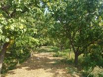 2000متر باغ در شهریار در شیپور