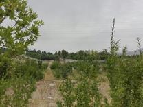 زمین 300 متر در شنده برجاده نزدیک شهرک طوبی در شیپور