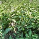 زمین کشاورزی 1400متر مناسب ویلا باغ