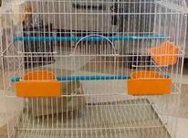 قفس نو بزرگ برای طوطی در شیپور-عکس کوچک