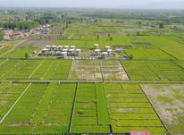 فروش زمین مسکونی 211 متر در چاف و چمخاله در شیپور-عکس کوچک
