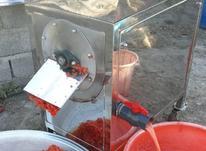 ابگیری گوجه در شیپور-عکس کوچک