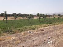 زمین درختکاری در شیپور-عکس کوچک