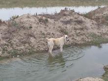 این سگ گم شده و یا به سرقت رفته در شیپور