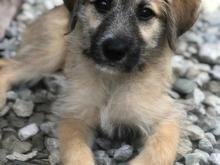 گمشده_توله سگ در شیپور