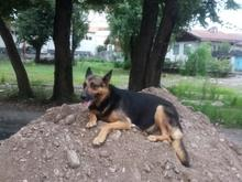 گمشده یه قلاد سگ در شیپور