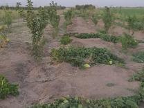 فروش زمین کشاورزی 500 متر در محمدیه در شیپور