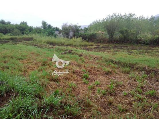 یک قطعه زمین زراعی فوری در گروه خرید و فروش املاک در مازندران در شیپور-عکس1