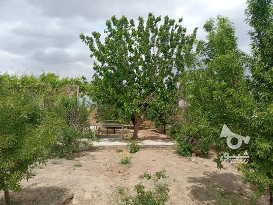 فروش خانه ویلایی در گروه خرید و فروش املاک در خراسان رضوی در شیپور-عکس5