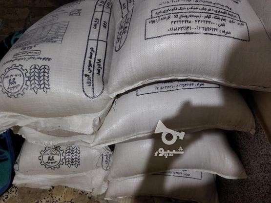 برنج طارم هاشمی محلی در گروه خرید و فروش خدمات و کسب و کار در مازندران در شیپور-عکس2