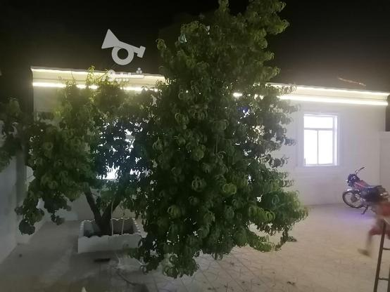 فروش ساختمان 196 متری در گروه خرید و فروش املاک در زنجان در شیپور-عکس4
