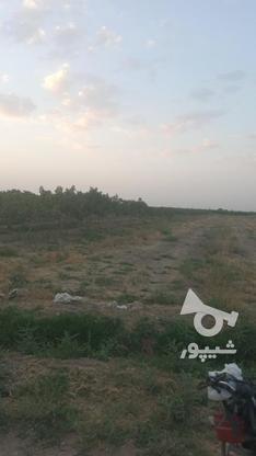فروش زمین واقع دربوئین زهرا در گروه خرید و فروش املاک در قزوین در شیپور-عکس6