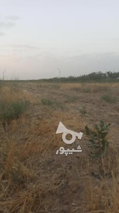فروش زمین واقع دربوئین زهرا در گروه خرید و فروش املاک در قزوین در شیپور-عکس4