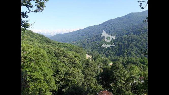 زمین مازندران سوادکوه فلورد300 متر مسکونی در گروه خرید و فروش املاک در مازندران در شیپور-عکس5