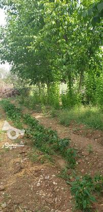 خریدار زمین در شهرکردهستم در گروه خرید و فروش املاک در چهارمحال و بختیاری در شیپور-عکس2