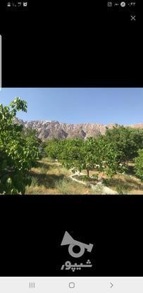 خریدار زمین در شهرکردهستم در گروه خرید و فروش املاک در چهارمحال و بختیاری در شیپور-عکس5
