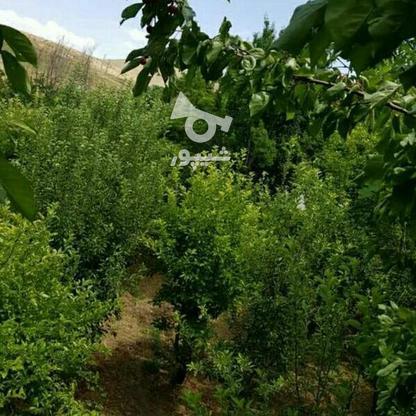 معاوضه و فروش باغ ویلا دماوند در گروه خرید و فروش املاک در تهران در شیپور-عکس3