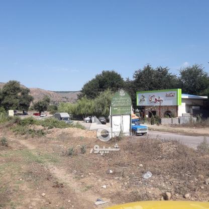 قطعه 1500متری واقع در کجور در گروه خرید و فروش املاک در مازندران در شیپور-عکس5