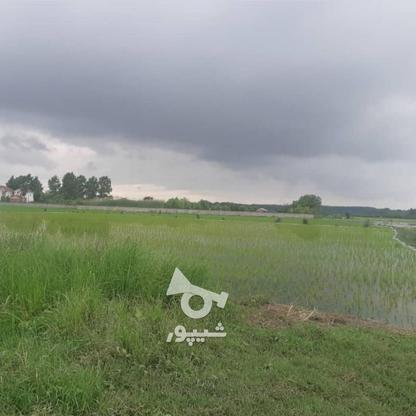 فروش زمین مسکونی 200 متر در محمودآباد در گروه خرید و فروش املاک در مازندران در شیپور-عکس2