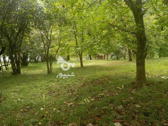 یک قطعه زمین به مساحت 500 متر  در گروه خرید و فروش املاک در گیلان در شیپور-عکس1