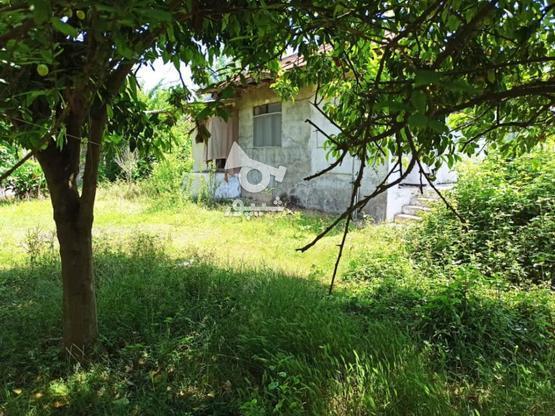 خانه کلنگی 600 متر روستایی در گروه خرید و فروش املاک در گیلان در شیپور-عکس1