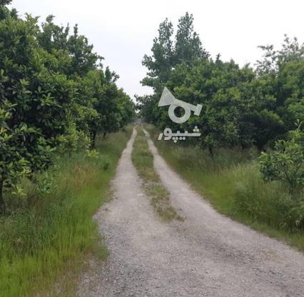 فروش زمین مسکونی در متراژهای از 200 متر   در گروه خرید و فروش املاک در مازندران در شیپور-عکس7